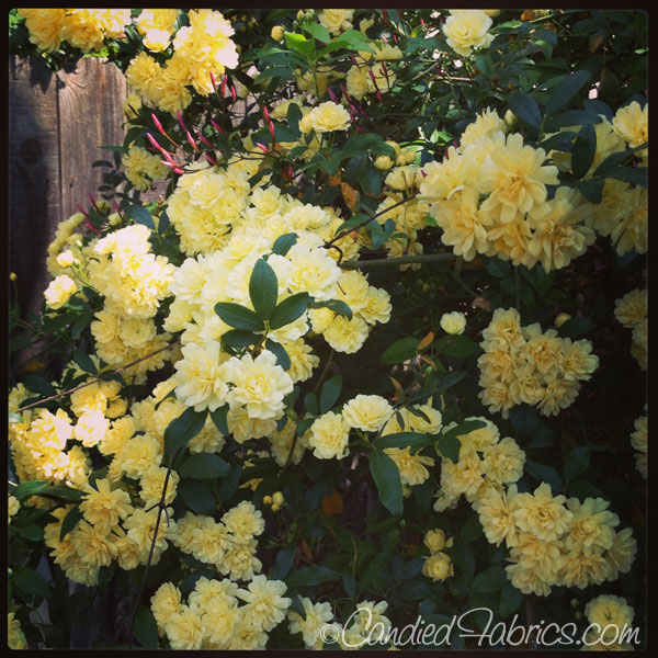 march-blooms-07