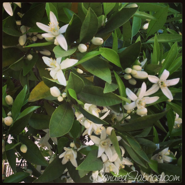 march-blooms-22