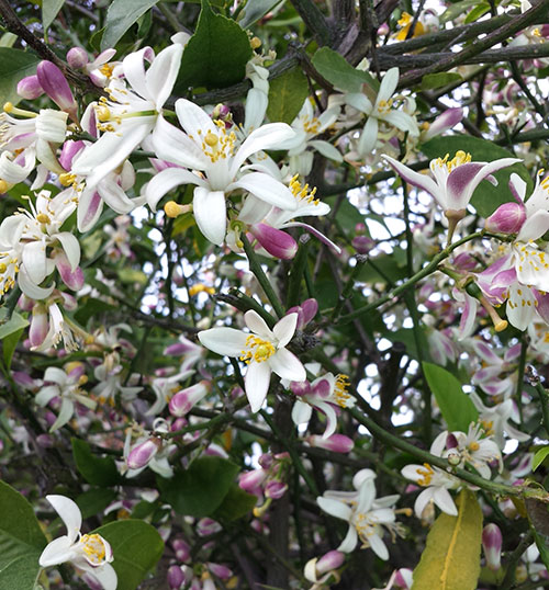 Spring-09